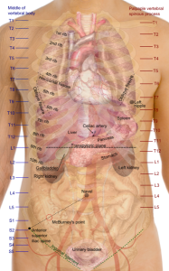 Alliance for Mutual Prosperity Current Human Body Diagram